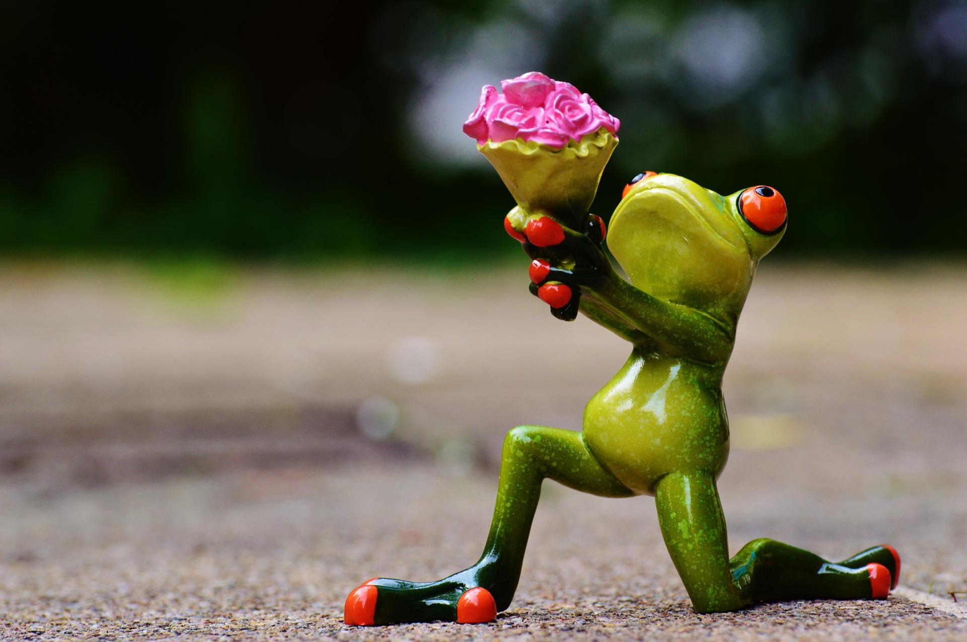青蛙, 花, 爱, 宽恕, 礼物, 玫瑰, 甜, 在你的膝盖上 - 高清壁纸 - 教授-falken.com