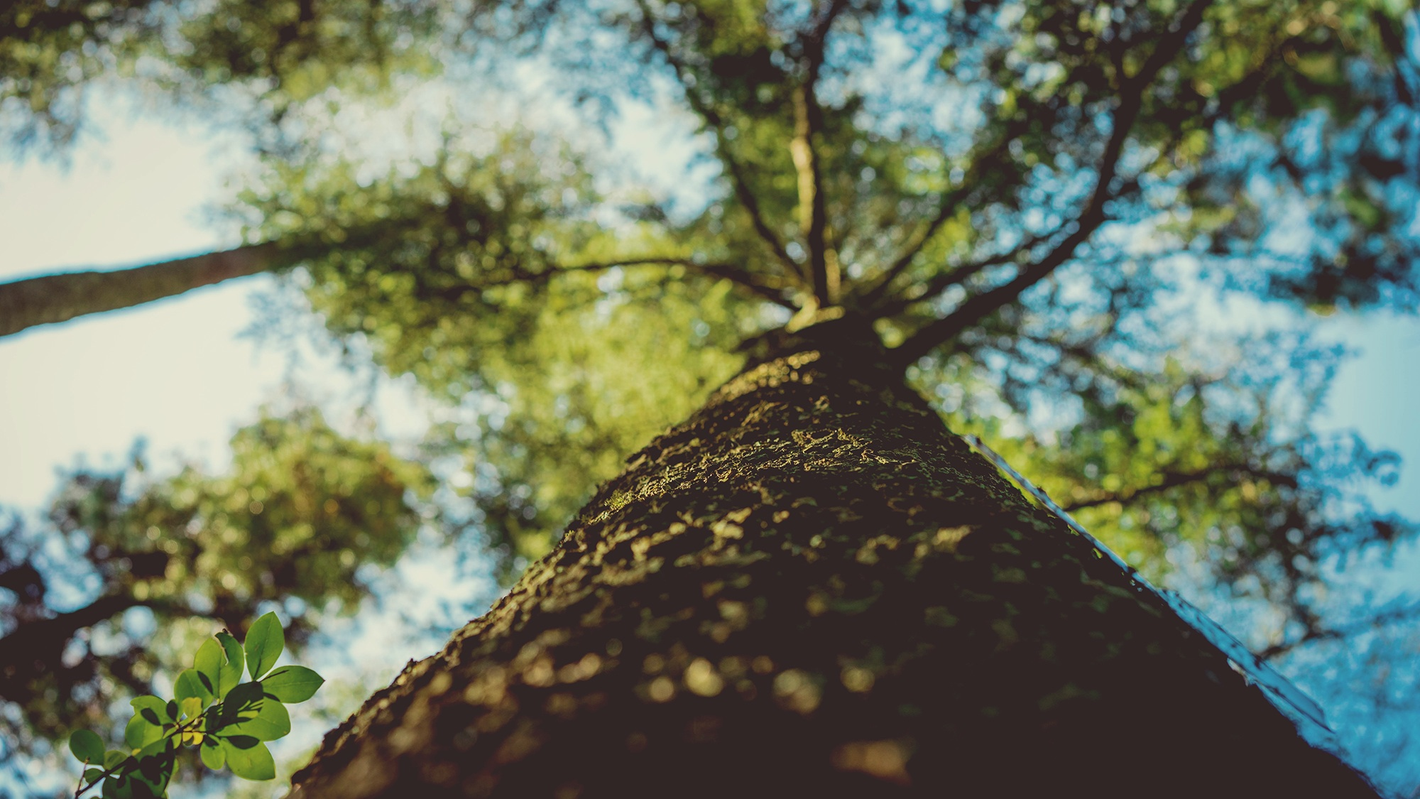 árbol, ramas, tronco, hojas, cielo, evolución - Fondos de Pantalla HD - professor-falken.com