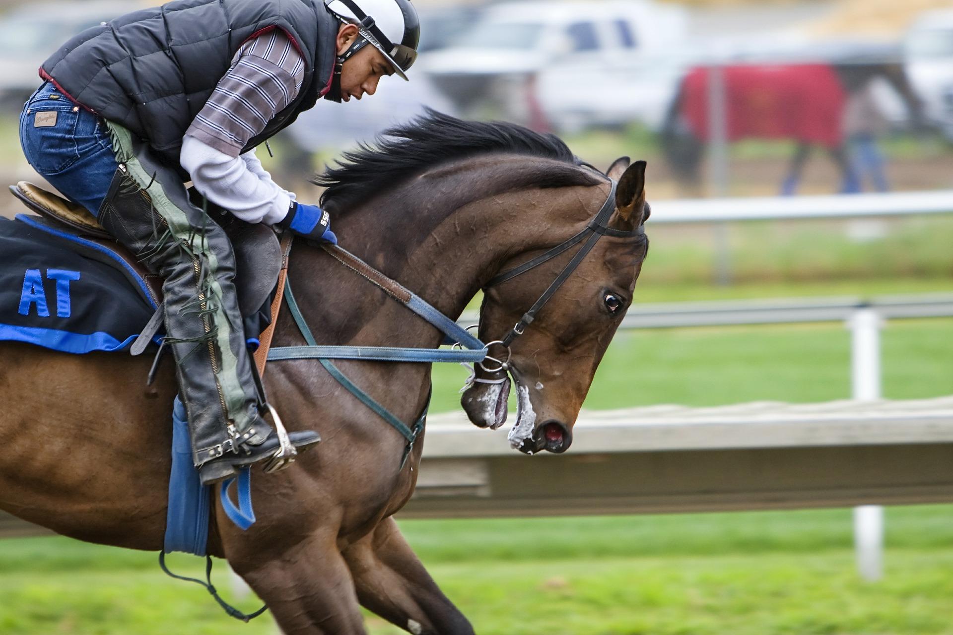 carrera, hípica, caballo, jinete, hipódromo - Fondos de Pantalla HD - professor-falken.com