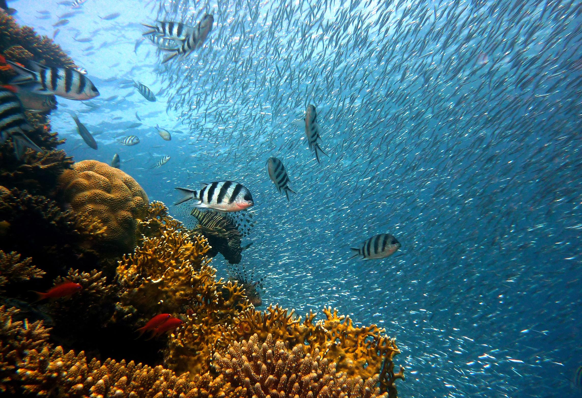 poisson, Corail, Banque, Arrecife, Mer - Fonds d'écran HD - Professor-falken.com
