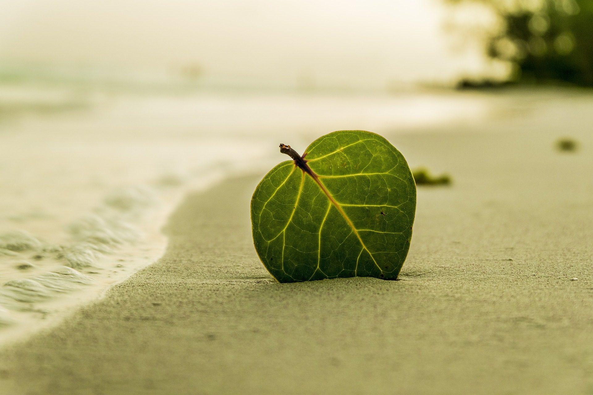 シート, ビーチ, 砂, unión, 海 - HD の壁紙 - 教授-falken.com