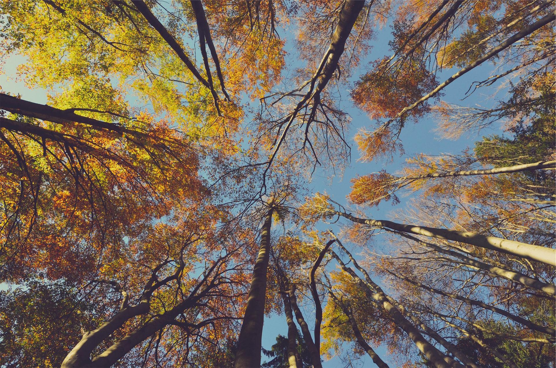 лес, деревья, чашки, Небо, Высота - Обои HD - Профессор falken.com
