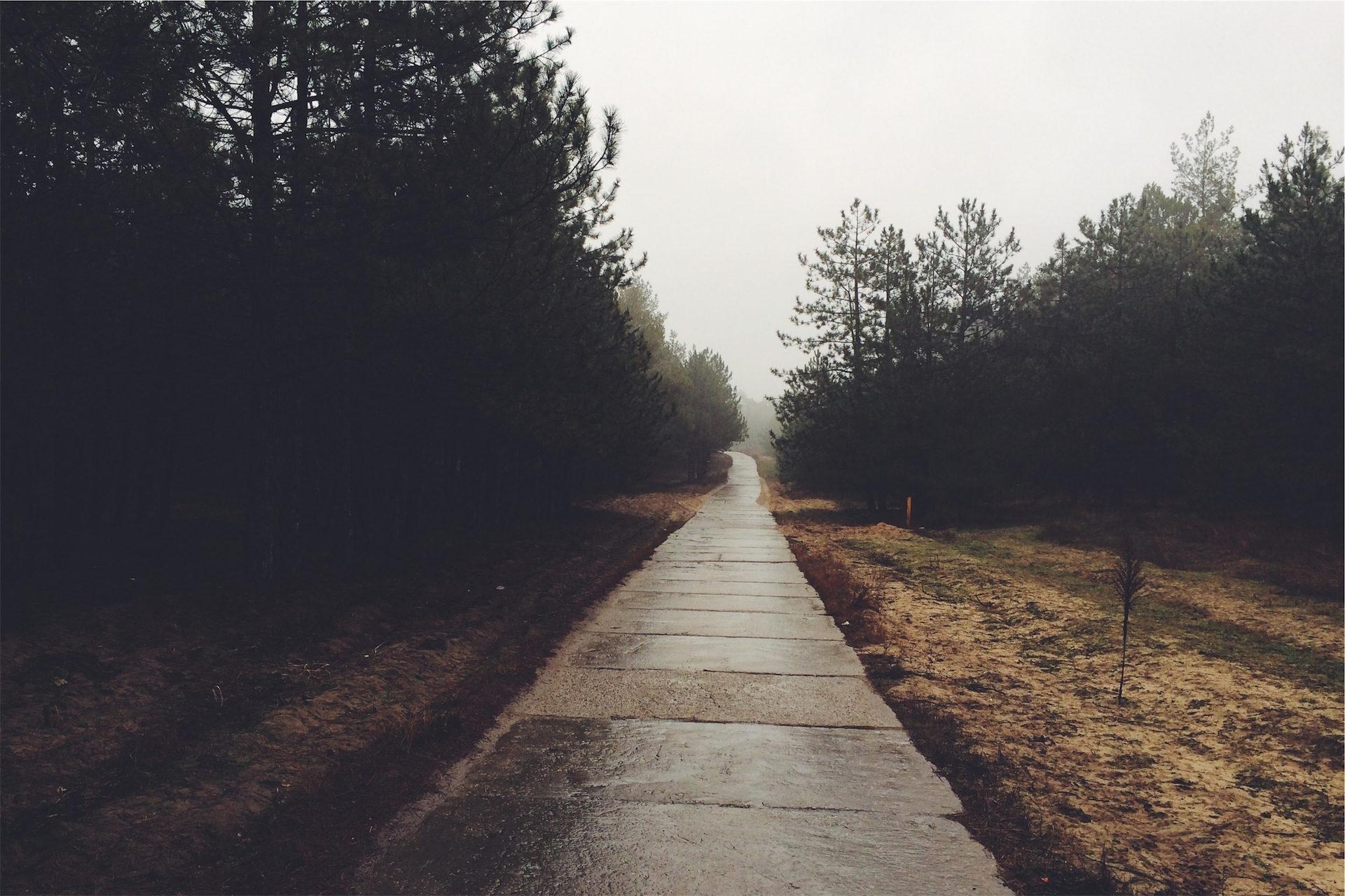 道路, 霧, フォレスト, ソレダ, リラックス - HD の壁紙 - 教授-falken.com