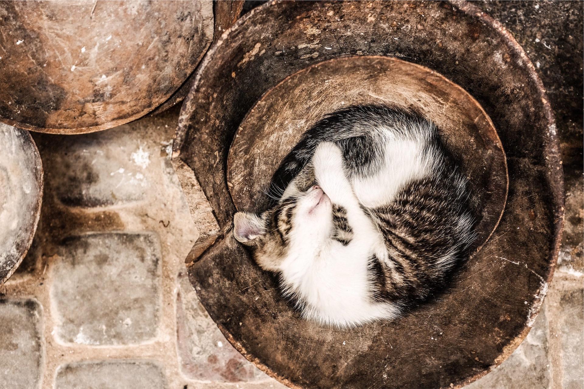 gato, dormir, mascota, vasija, monada - Fondos de Pantalla HD - professor-falken.com