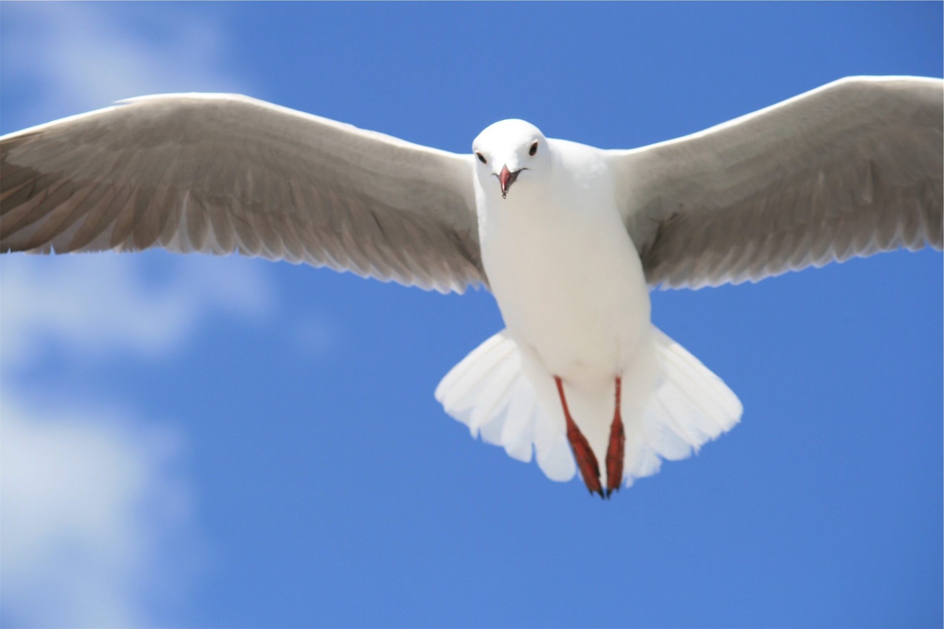 Mouette, ailes, vol, Ave, Sky - Fonds d'écran HD - Professor-falken.com