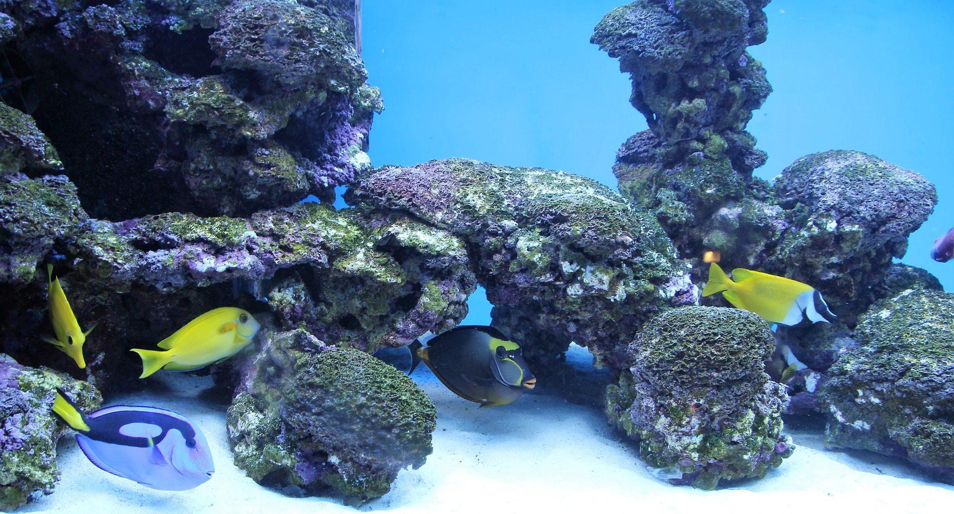 Fondo de pantalla de acuario peces tropicales corales for Peces tropicales acuario